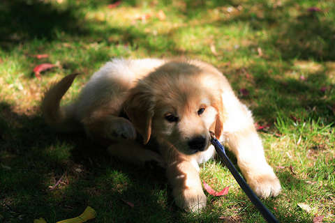 puppy laying on grass